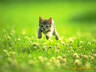 cute-running-kitten-outside