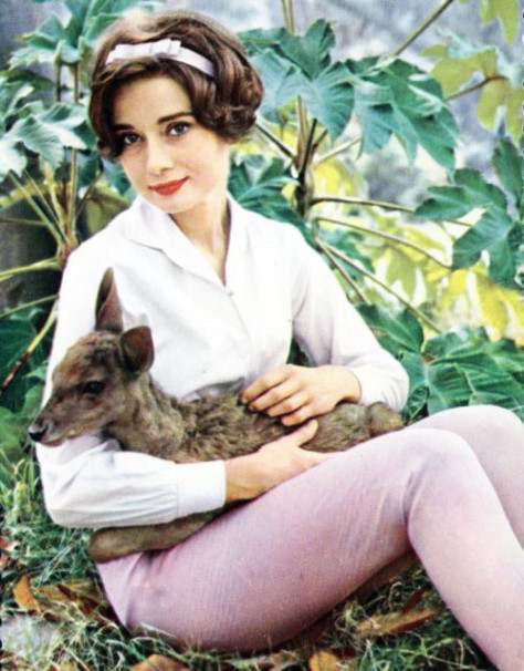 her-royal-highness-audrey-hepburn-the-desires-of-your-hear-corporation-4