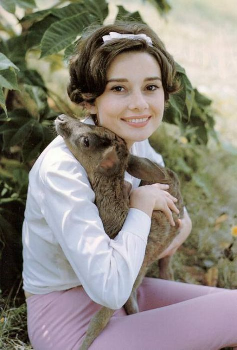 her-royal-highness-audrey-hepburn-the-desires-of-your-hear-corporation-wildlife-photo-10